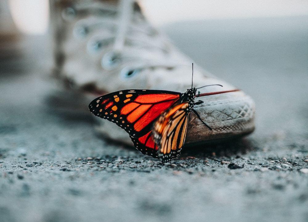 Butterfly on shoe