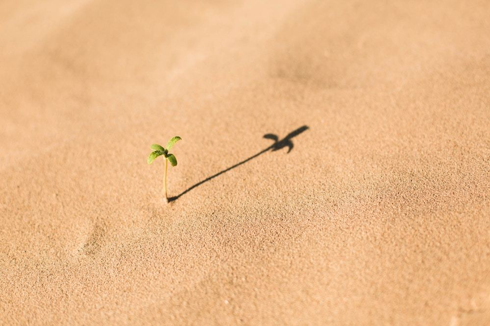 Plant growing from sand