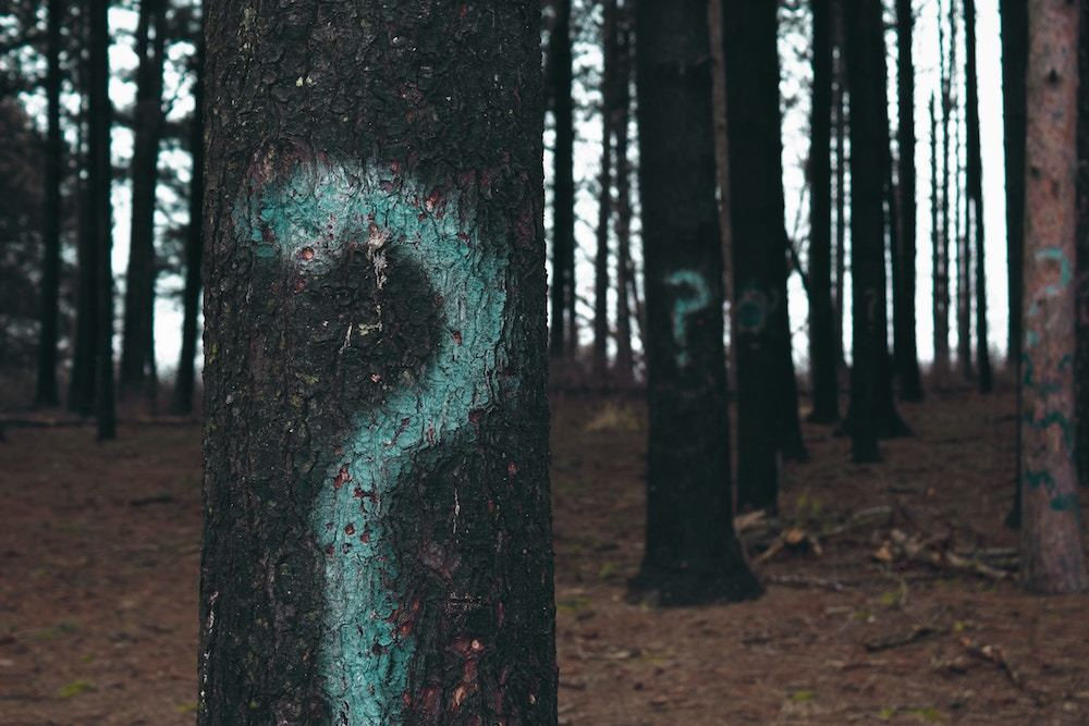 question mark on trees