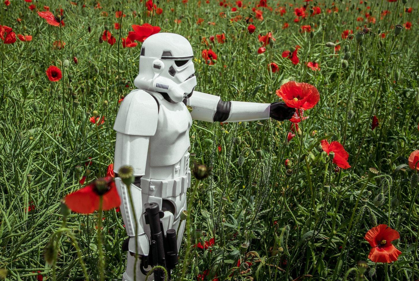 Stormtrooper holding a flower