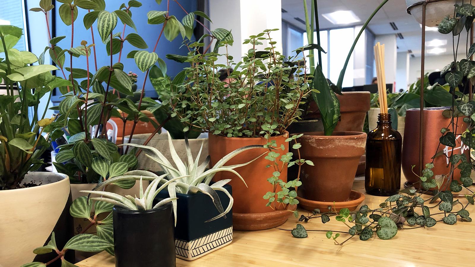 DC-Office_Plants